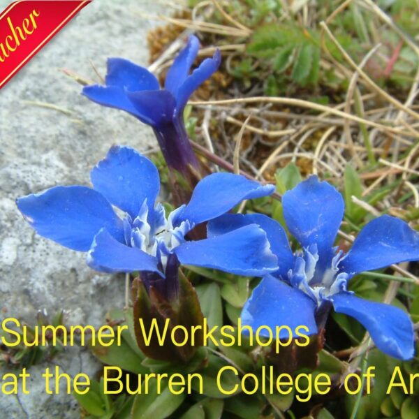 Summer workshops gift vouchers
